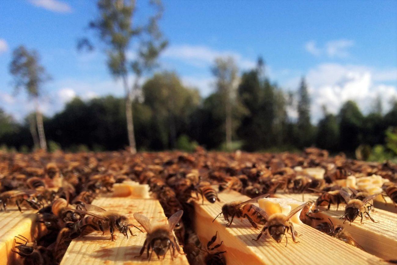 Mesilased ja mets